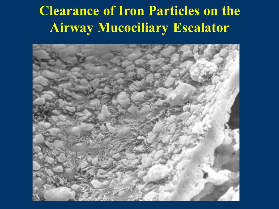 Clearance of Iron Particles on the Airway Mucociliary Escalator