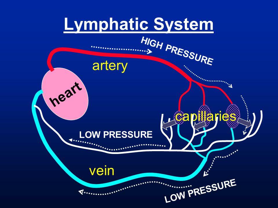 HIGH PRESSURE heart artery vein capillaries LOW PRESSURE