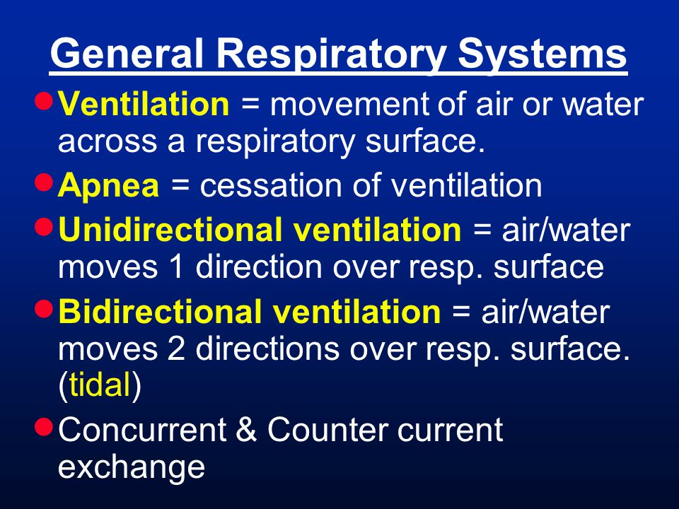  Ventilation = movement of air or water across a respiratory surface.  Apnea = cessation of ventilation  Unidirectional ventilation = air/water mov