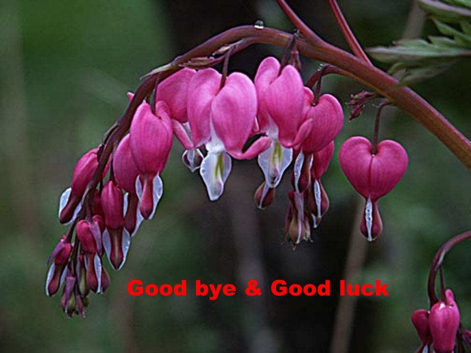 Good bye & Good luck