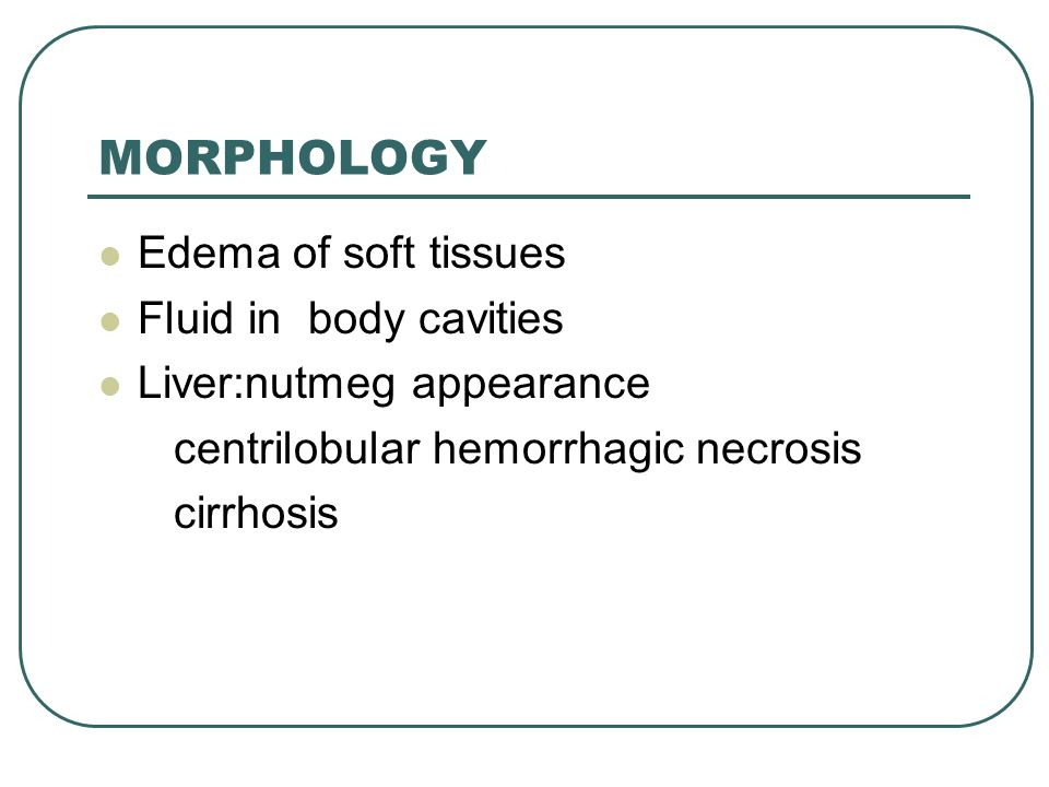 MORPHOLOGY Edema of soft tissues Fluid in body cavities Liver:nutmeg appearance centrilobular hemorrhagic necrosis cirrhosis