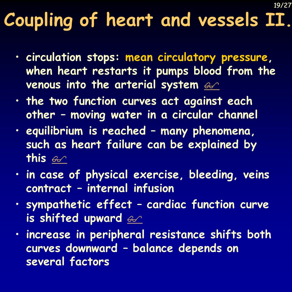 Coupling of heart and vessels II.