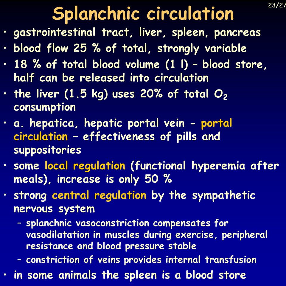 Splanchnic circulation gastrointestinal tract, liver, spleen, pancreas blood flow 25 % of total, strongly variable 18 % of total blood volume (1 l) – blood store, half can be released into circulation the liver (1.5 kg) uses 20% of total O 2 consumption a.