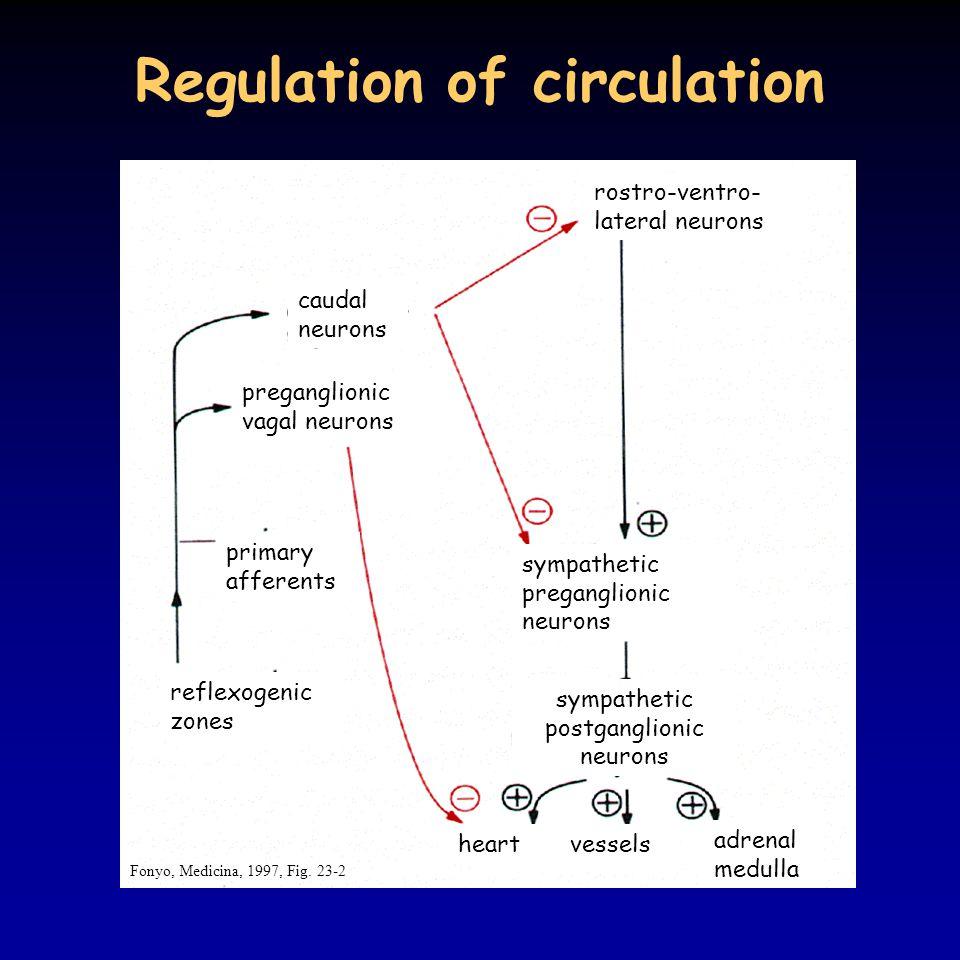Regulation of circulation Fonyo, Medicina, 1997, Fig.