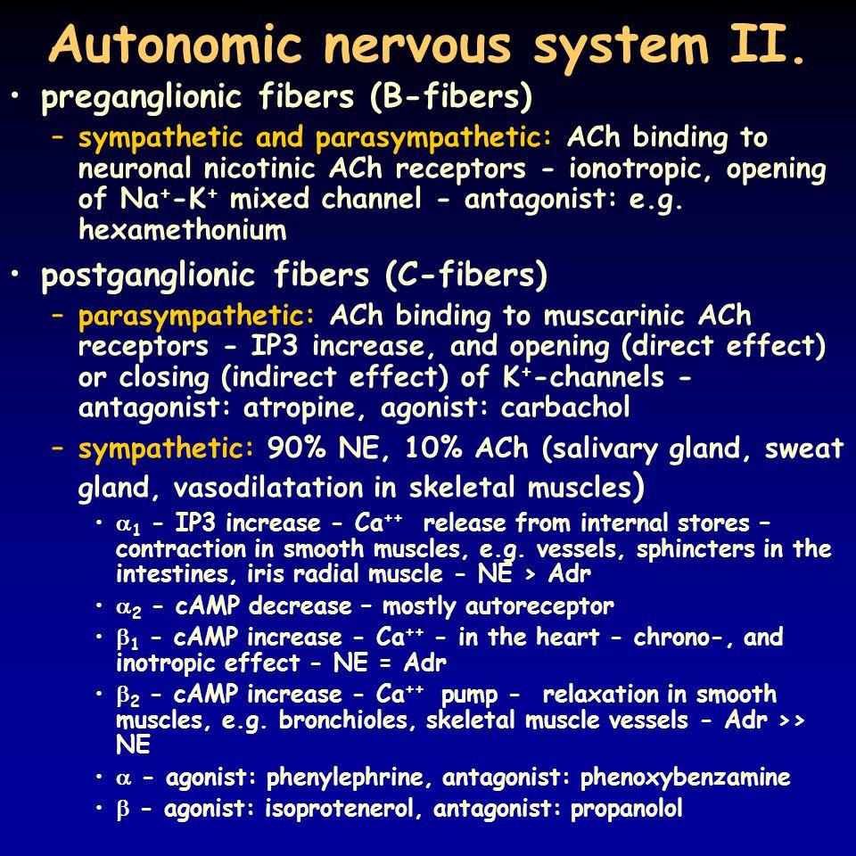 Autonomic nervous system II.