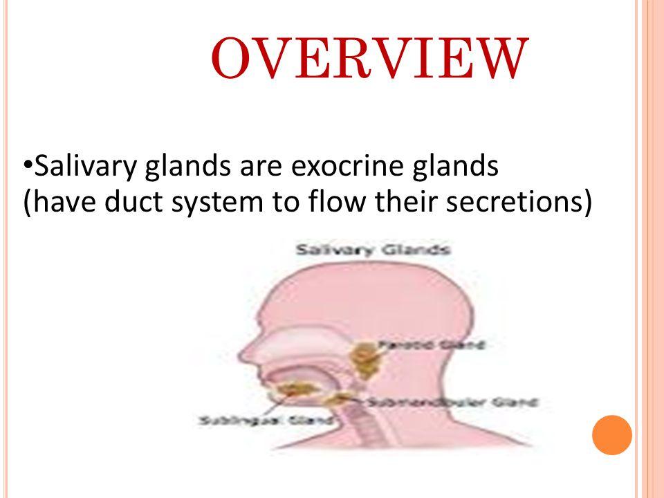 T YPES OF SALIVARY GLANDS  The Major Salivary Glands  The Minor Salivary Glands Parotid glands.