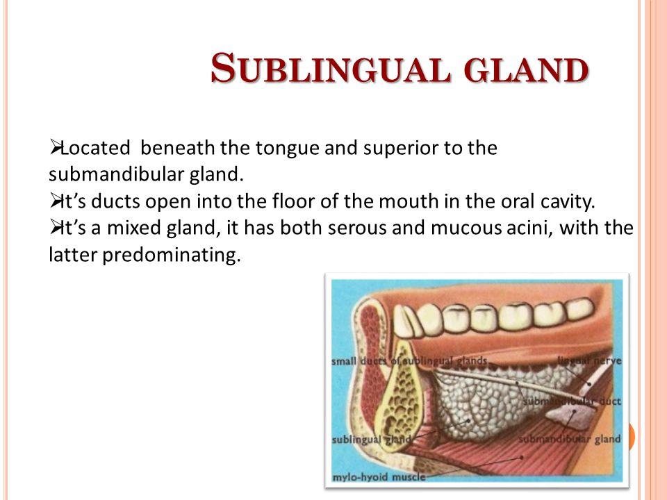 N ERVE SUPPLY OF MAJOR SALIVARY GLANDS  Parotid Gland glossopharyngeal  Parasympthetic secretomotor supply arises from the glossopharyngeal nerve.