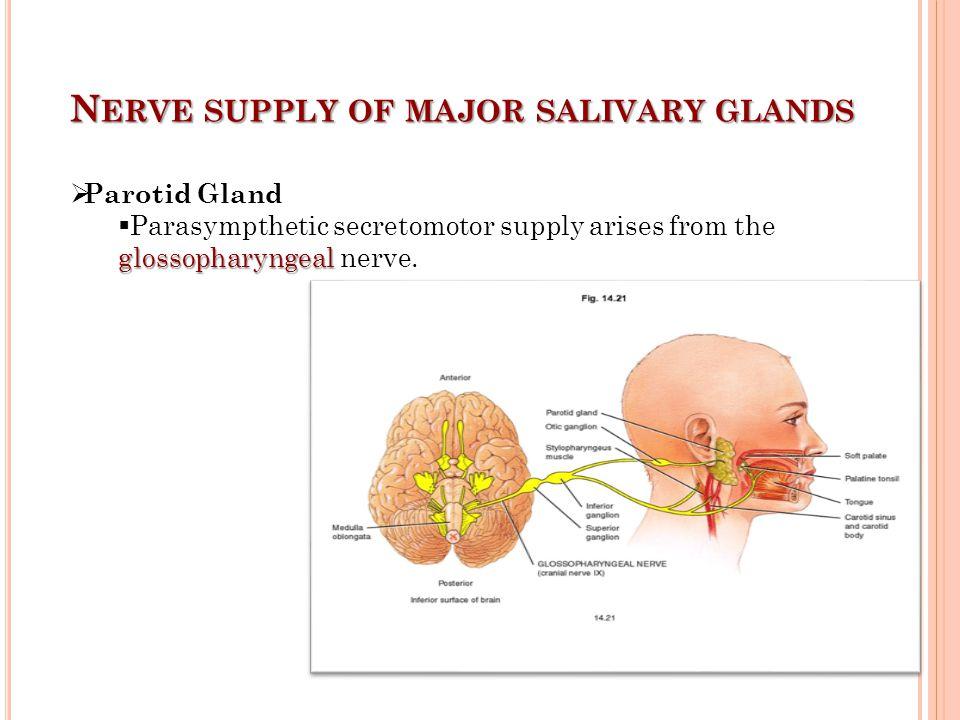 N ERVE SUPPLY OF MAJOR SALIVARY GLANDS  Submandibular Gland the facial  Parasympathetic secremotor supply is from the facial nerve.