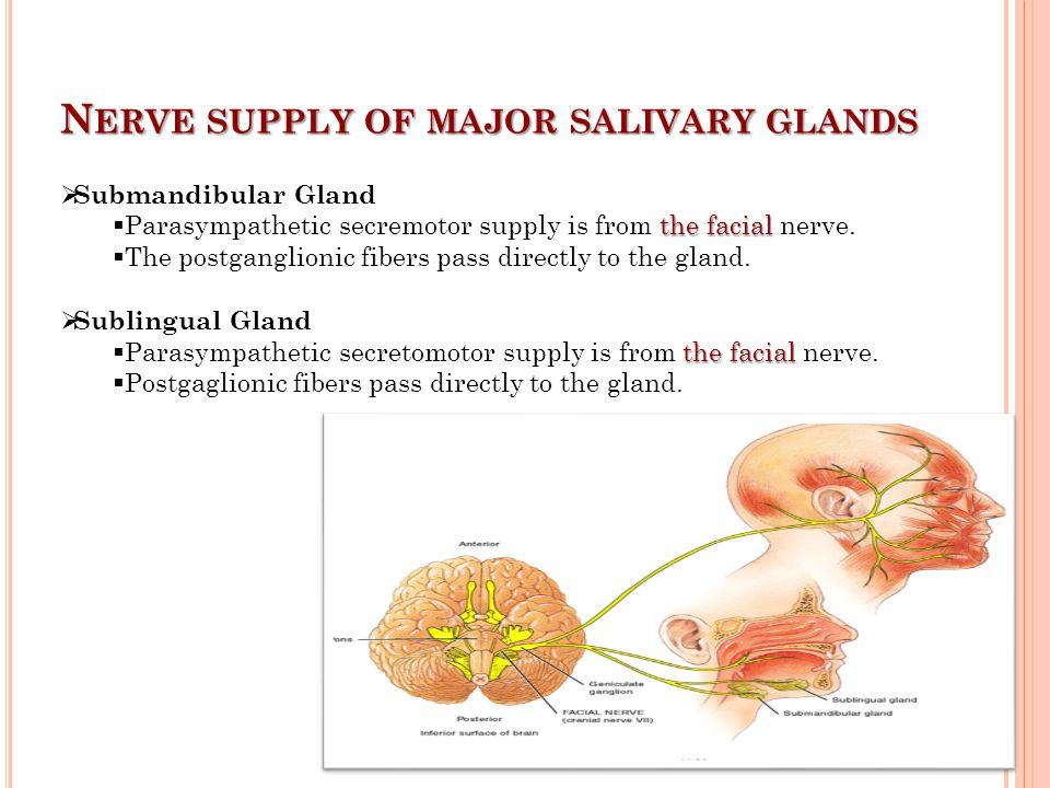 N ERVE SUPPLY OF MAJOR SALIVARY GLANDS  Submandibular Gland the facial  Parasympathetic secremotor supply is from the facial nerve.  The postgangli