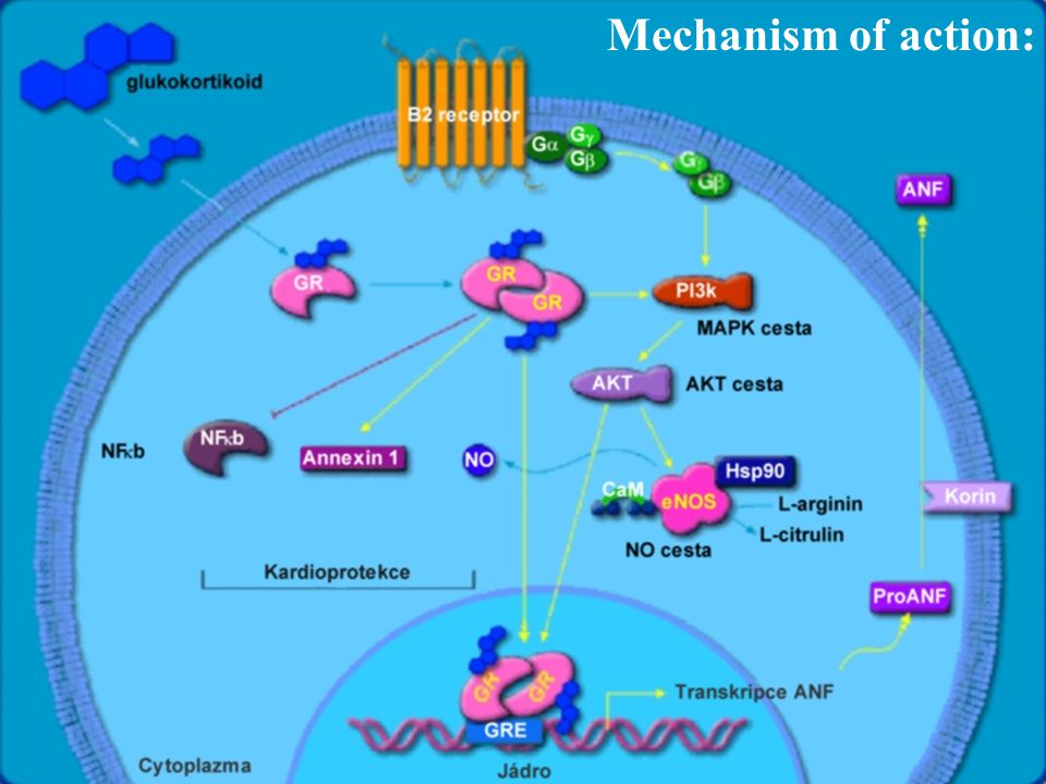 Mechanism of action: