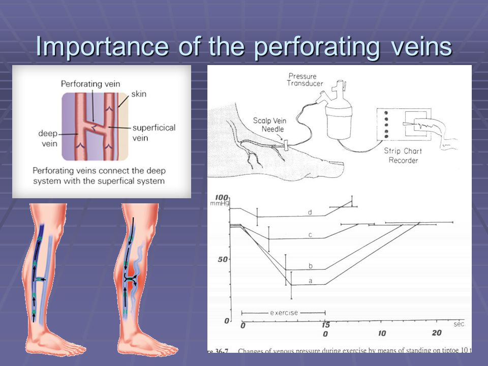 Importance of the perforating veins