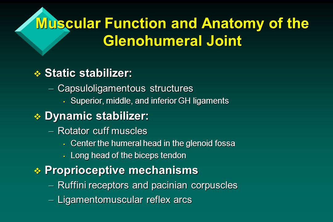 Muscular Function and Anatomy of the Glenohumeral Joint  Static stabilizer:  Capsuloligamentous structures Superior, middle, and inferior GH ligamen