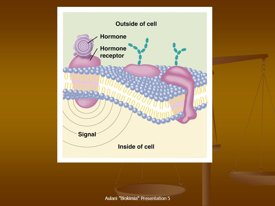 Hormones Chemical messengers that are made in one part of the body but act on cells in other parts of the body. Chemical messengers that are made in o