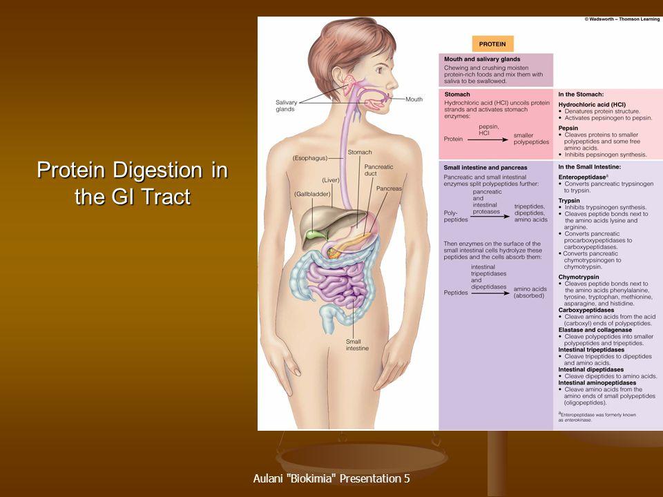 Aulani Biokimia Presentation 5 Small Intestine Releases pancreatic and intestinal proteases.