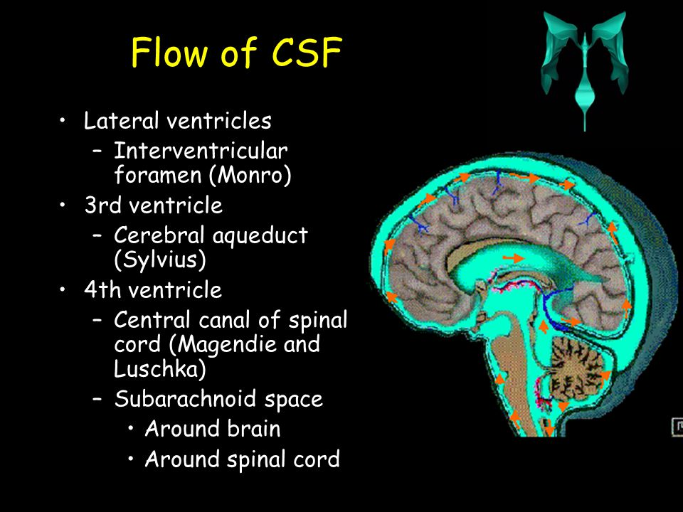 Flow of CSF Lateral ventricles –Interventricular foramen 3rd ventricle –Cerebral aqueduct 4th ventricle –Central canal of spinal cord –Subarachnoid space Around brain Around spinal cord