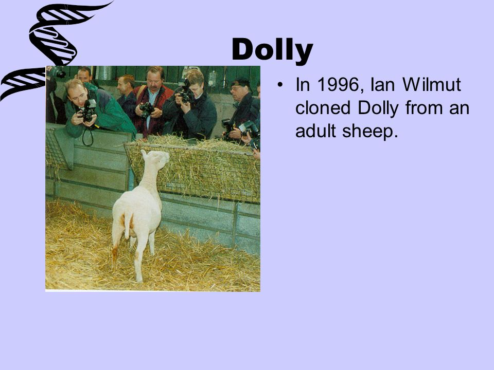 Dolly In 1996, Ian Wilmut cloned Dolly from an adult sheep.