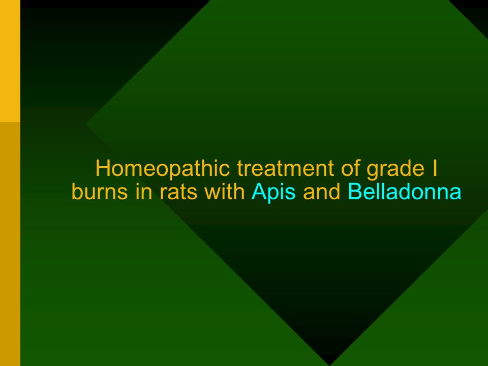 Homeopathic treatment of grade I burns in rats with Apis and Belladonna