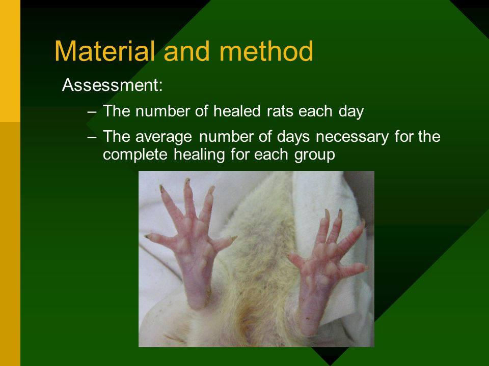 Material and method Assessment: –The number of healed rats each day –The average number of days necessary for the complete healing for each group