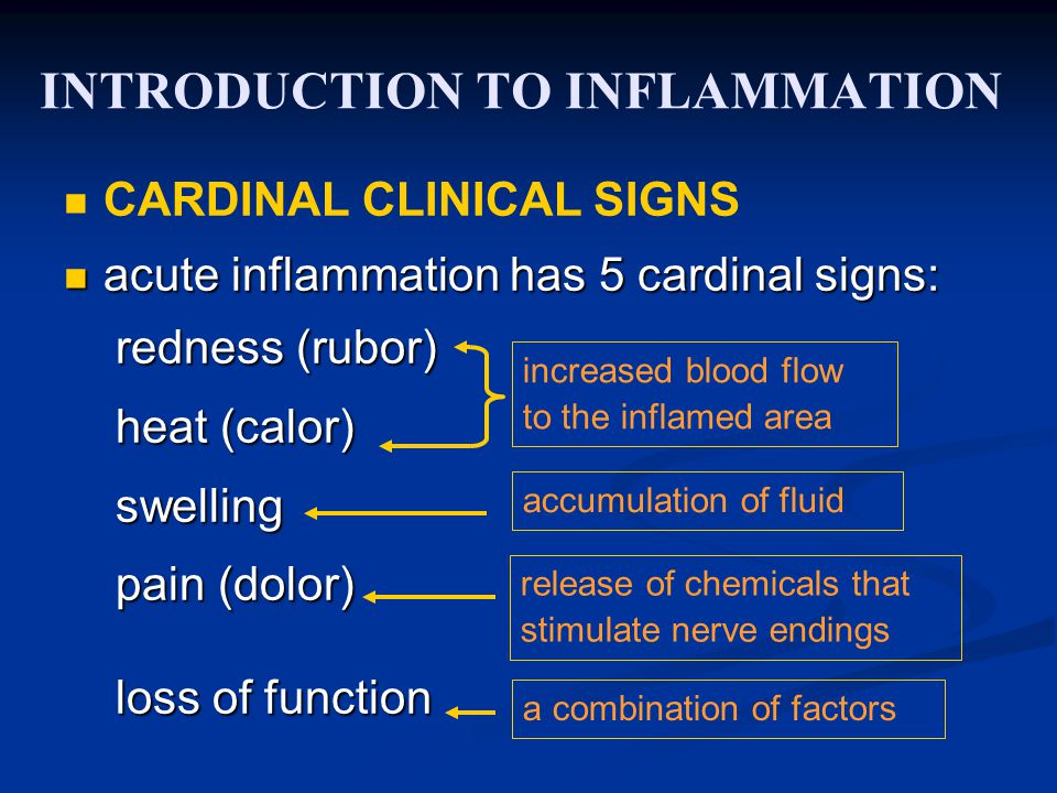 INTRODUCTION TO INFLAMMATION CARDINAL CLINICAL SIGNS acute inflammation has 5 cardinal signs: acute inflammation has 5 cardinal signs: redness (rubor) redness (rubor) heat (calor) heat (calor) swelling swelling pain (dolor) pain (dolor) loss of function loss of function increased blood flow to the inflamed area accumulation of fluid release of chemicals that stimulate nerve endings a combination of factors