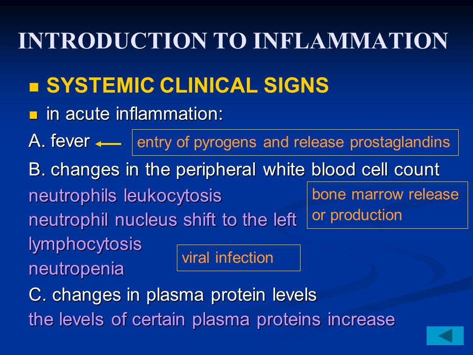 INTRODUCTION TO INFLAMMATION SYSTEMIC CLINICAL SIGNS in acute inflammation: in acute inflammation: A. fever B. changes in the peripheral white blood c