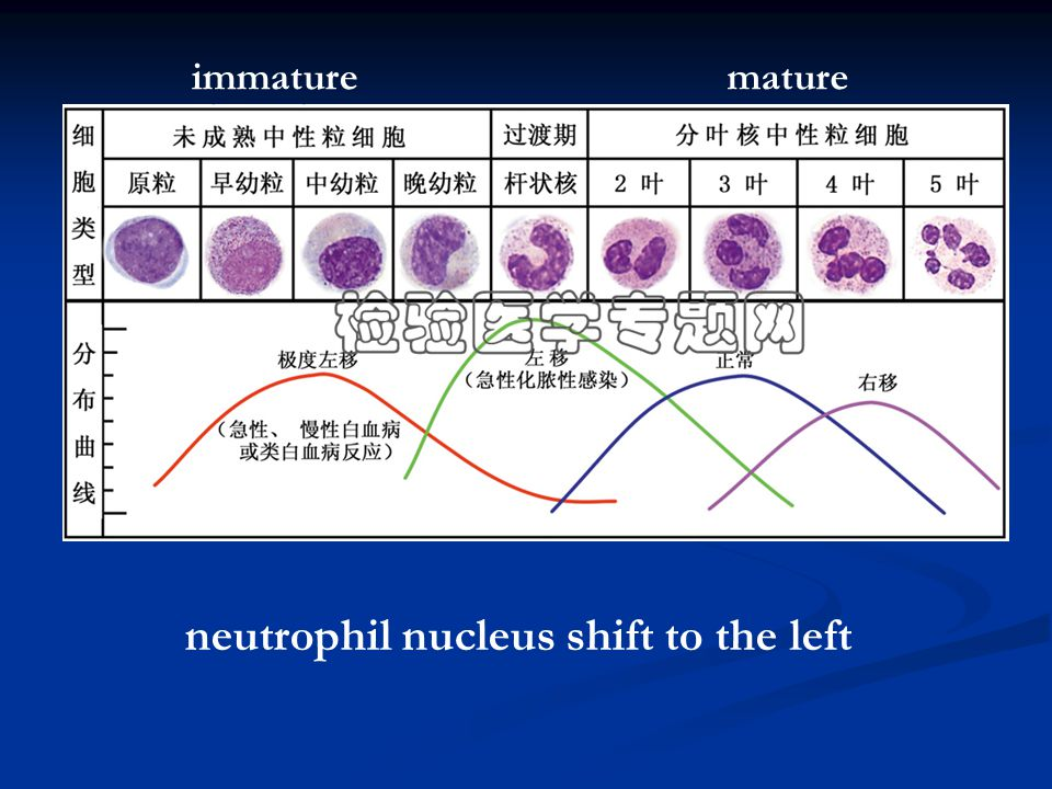 neutrophil nucleus shift to the left matureimmature