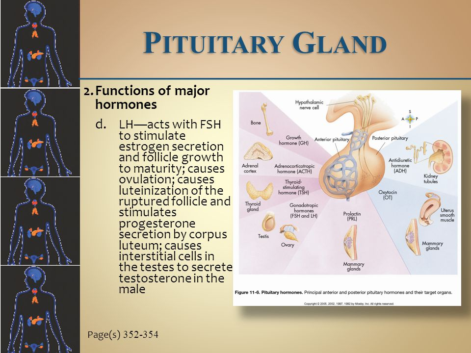 Page(s) 352-354 2.Functions of major hormones d.