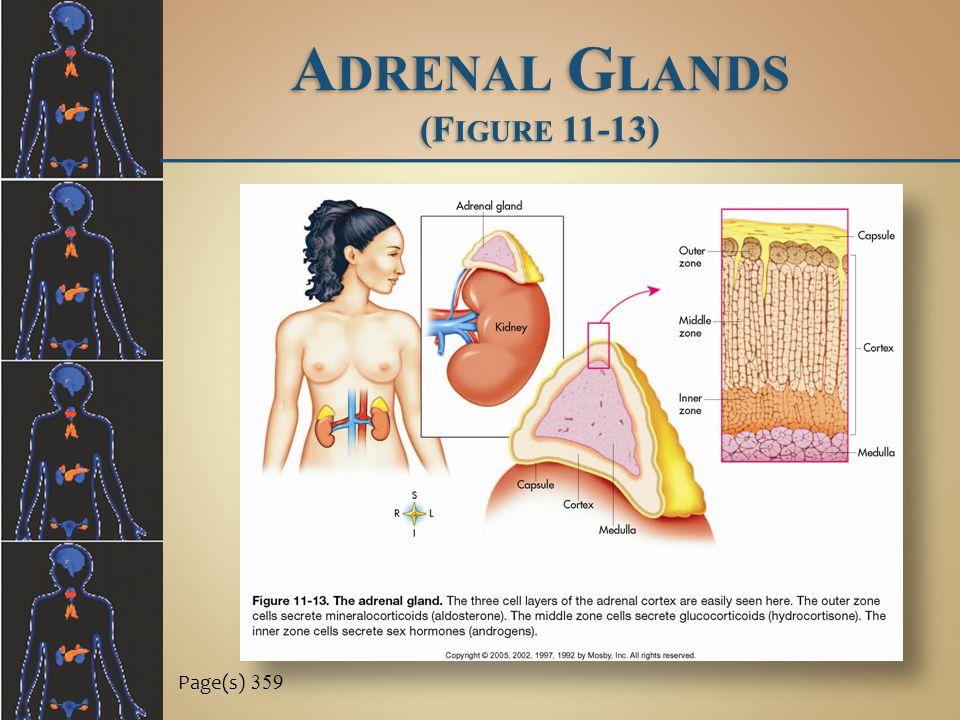 A DRENAL G LANDS (F IGURE 11-13) Page(s) 359
