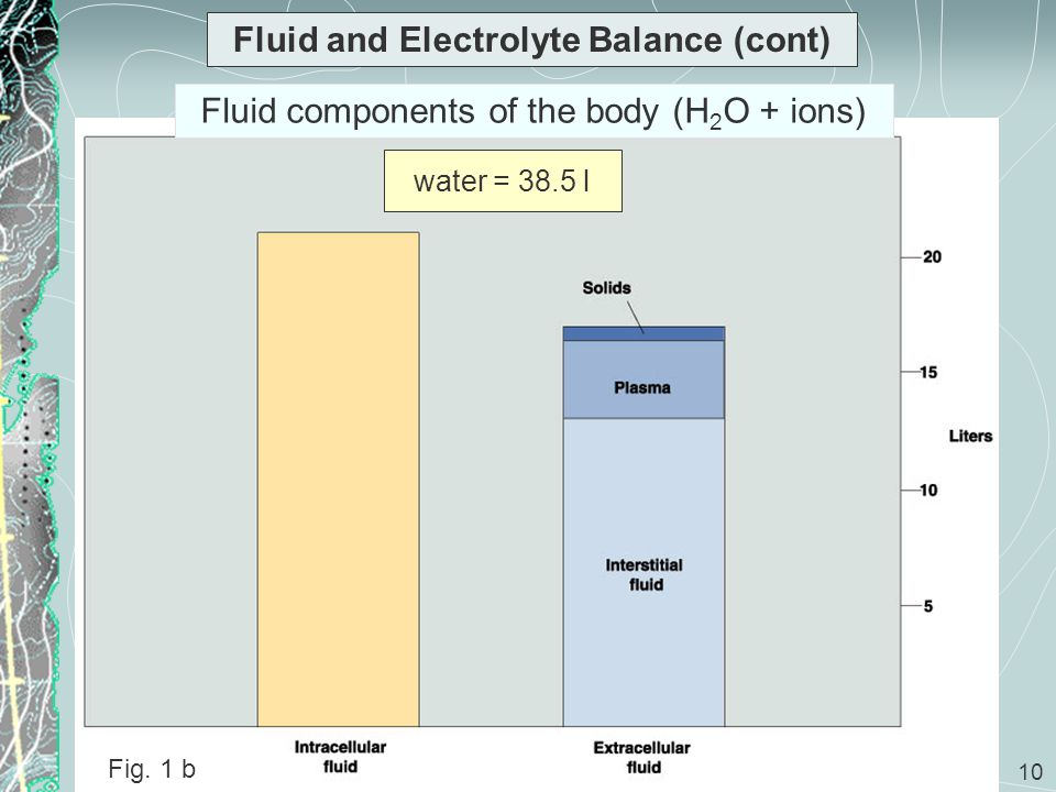 10 Fluid and Electrolyte Balance (cont) Fig. 1 b water = 38.5 l Fluid components of the body (H 2 O + ions)