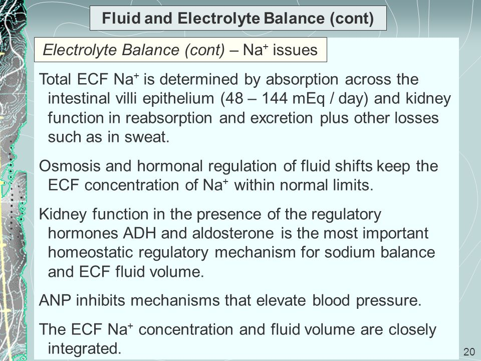 20 Fluid and Electrolyte Balance (cont) Total ECF Na + is determined by absorption across the intestinal villi epithelium (48 – 144 mEq / day) and kid