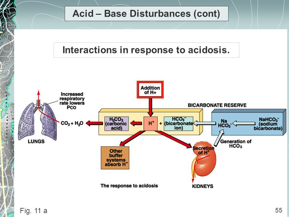 55 Acid – Base Disturbances (cont) Interactions in response to acidosis. 55 Fig. 11 a