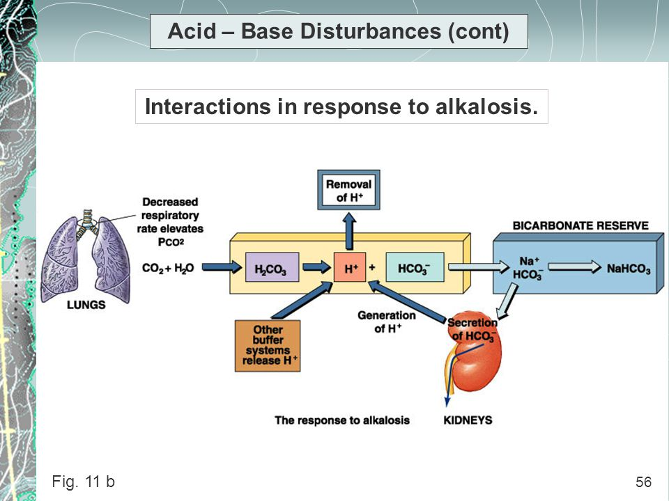 56 Acid – Base Disturbances (cont) Interactions in response to alkalosis. Fig. 11 b 56