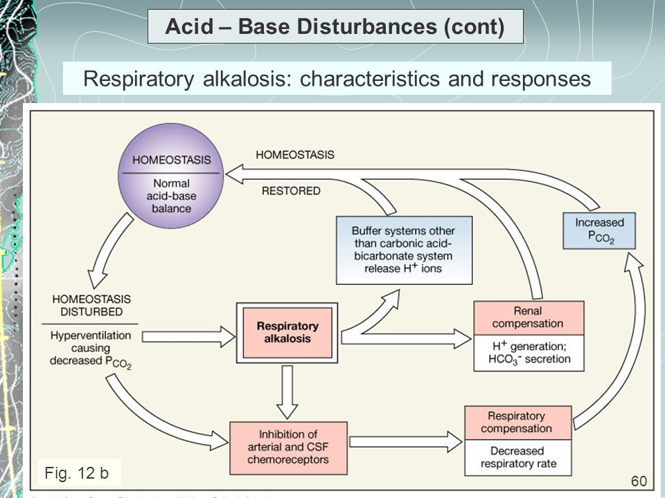 60 Acid – Base Disturbances (cont) Respiratory alkalosis: characteristics and responses Fig. 12 b 60