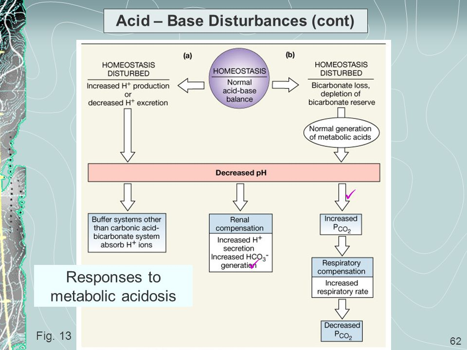 62 Acid – Base Disturbances (cont) Fig. 13 Responses to metabolic acidosis