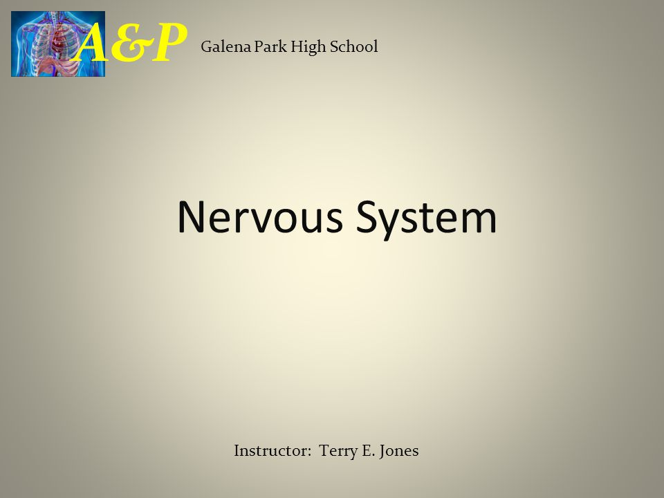 Nervous System Galena Park High School A&P Instructor: Terry E. Jones