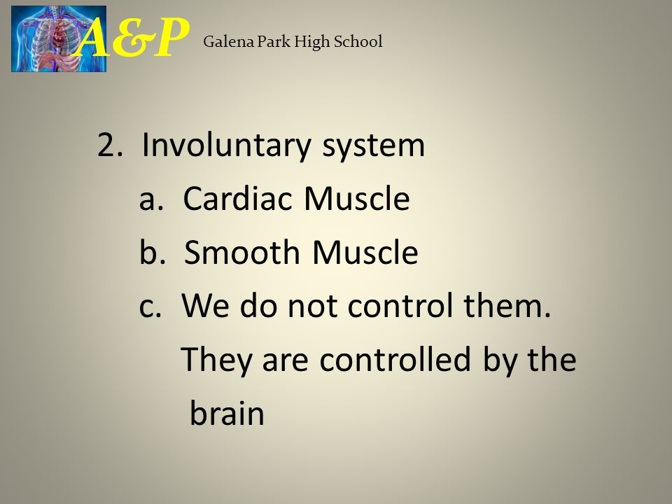 2. Involuntary system a. Cardiac Muscle b. Smooth Muscle c.