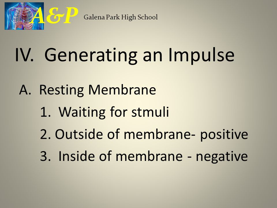 A. Resting Membrane 1. Waiting for stmuli 2. Outside of membrane- positive 3.