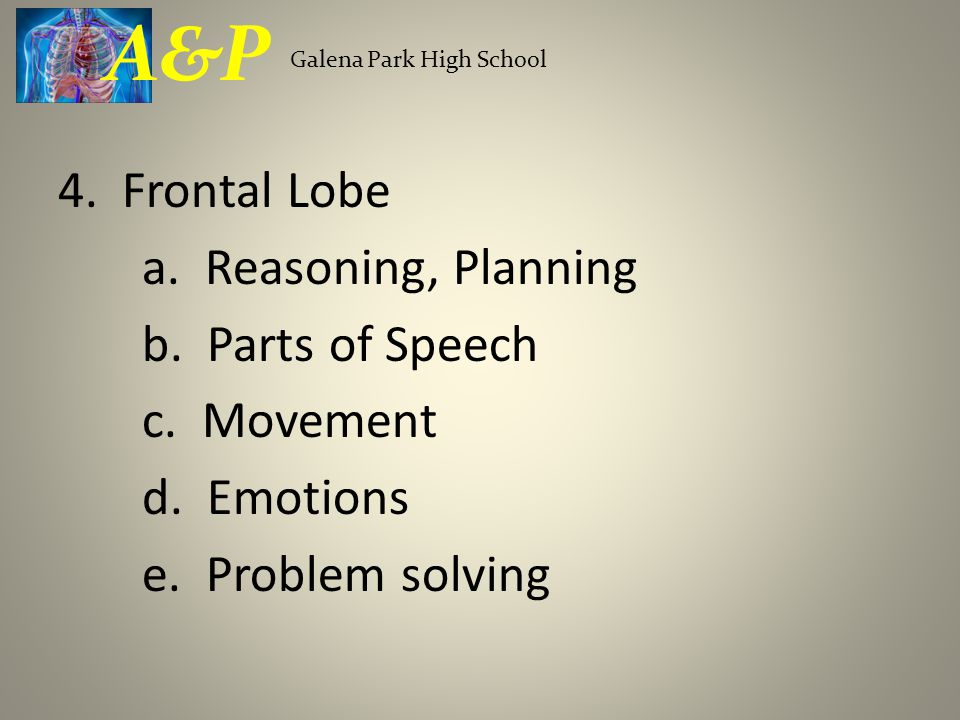 4. Frontal Lobe a. Reasoning, Planning b. Parts of Speech c.