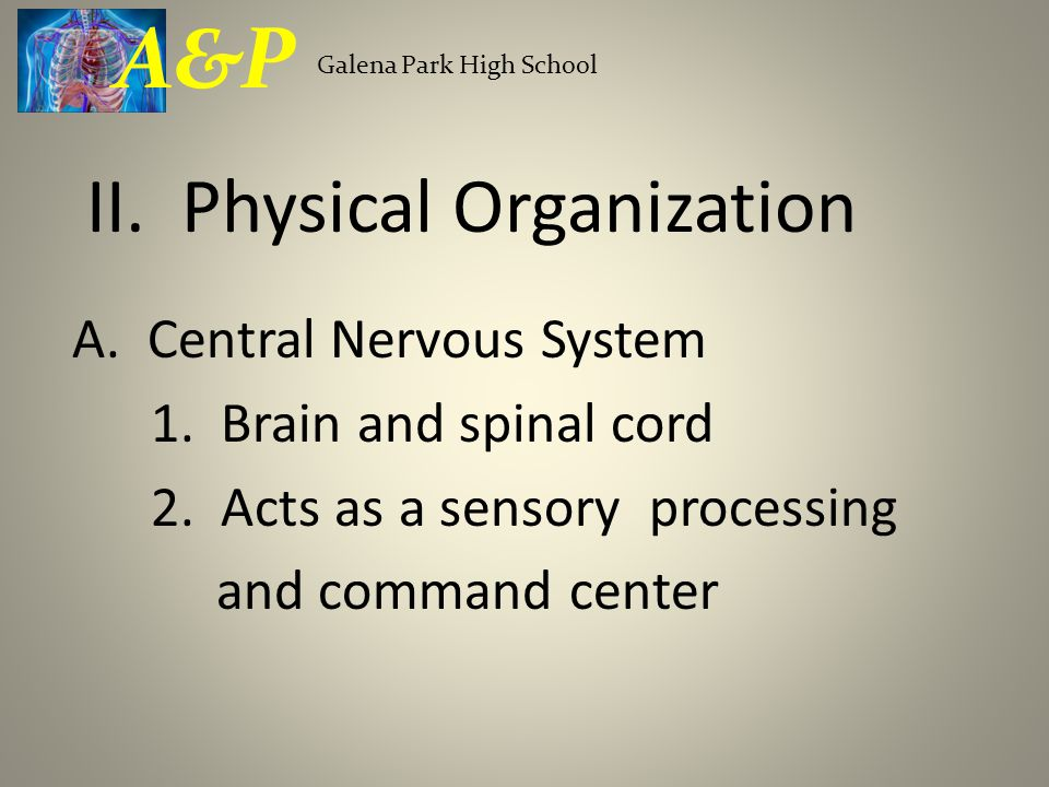A. Central Nervous System 1. Brain and spinal cord 2.