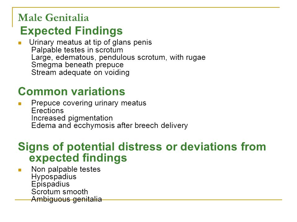 Male Genitalia Expected Findings Urinary meatus at tip of glans penis Palpable testes in scrotum Large, edematous, pendulous scrotum, with rugae Smegm