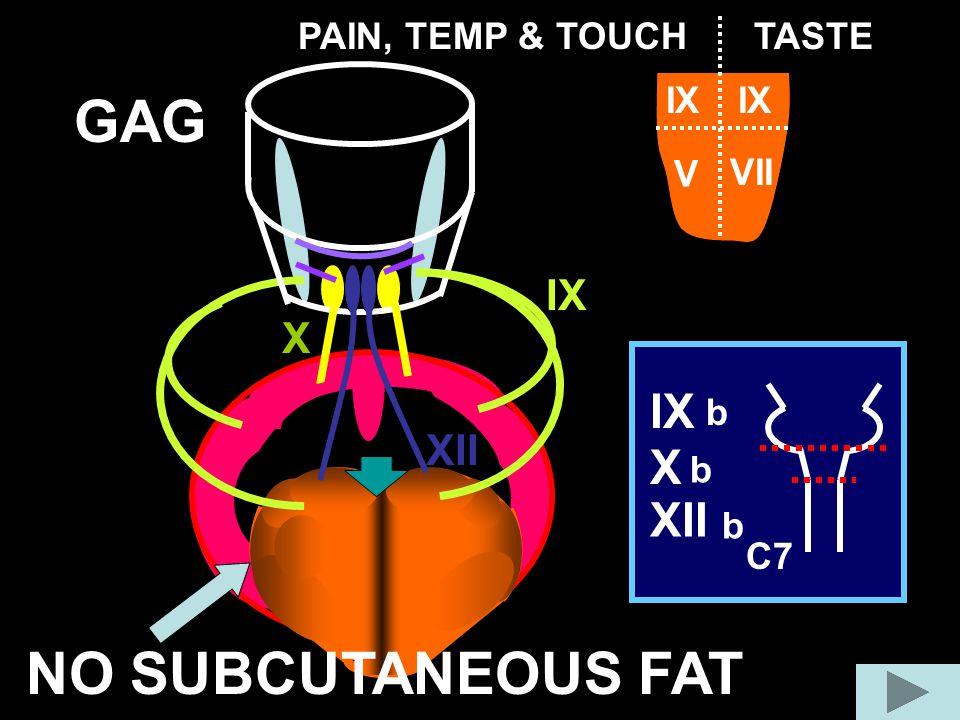GAG X IX XII C7 X IX XII b b b IX V VII TASTEPAIN, TEMP & TOUCH NO SUBCUTANEOUS FAT