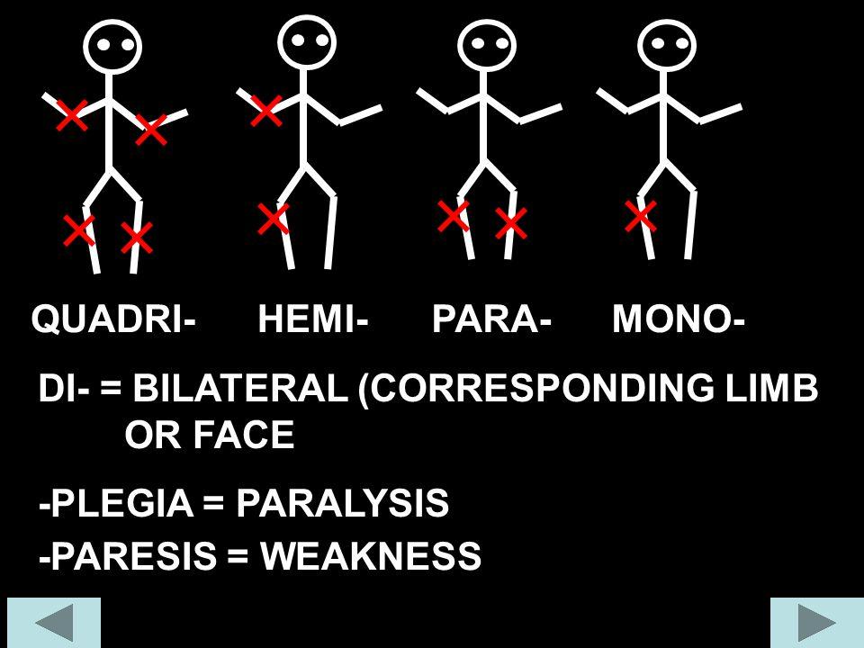 QUADRI-HEMI-PARA-MONO- DI- = BILATERAL (CORRESPONDING LIMB OR FACE -PLEGIA = PARALYSIS -PARESIS = WEAKNESS