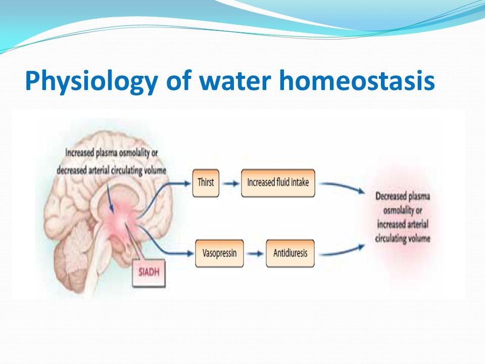Physiology of water homeostasis