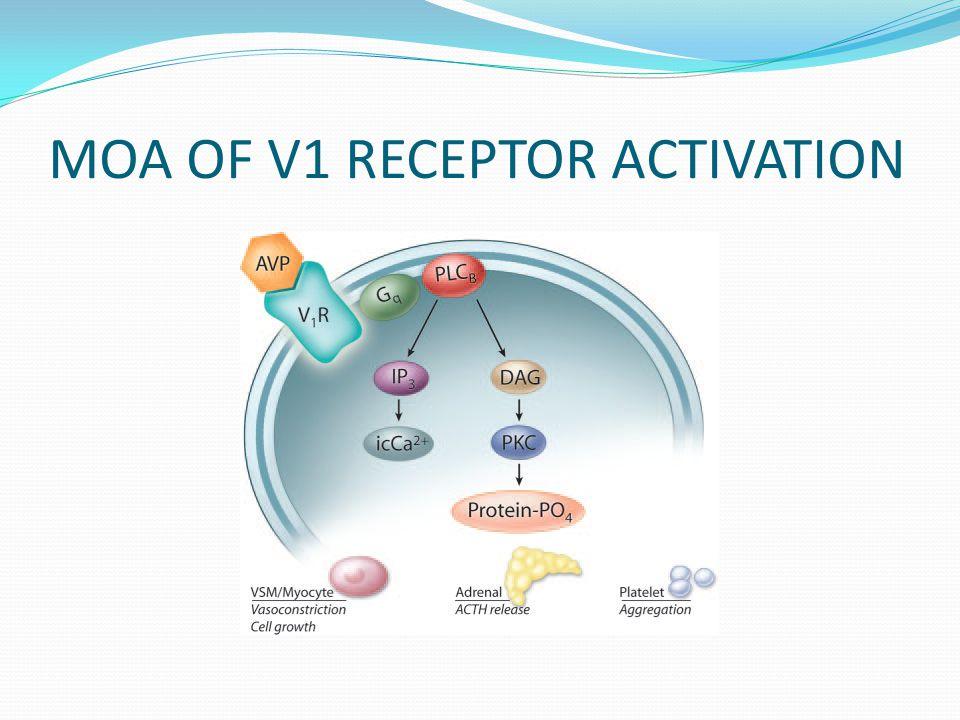 MOA OF V1 RECEPTOR ACTIVATION