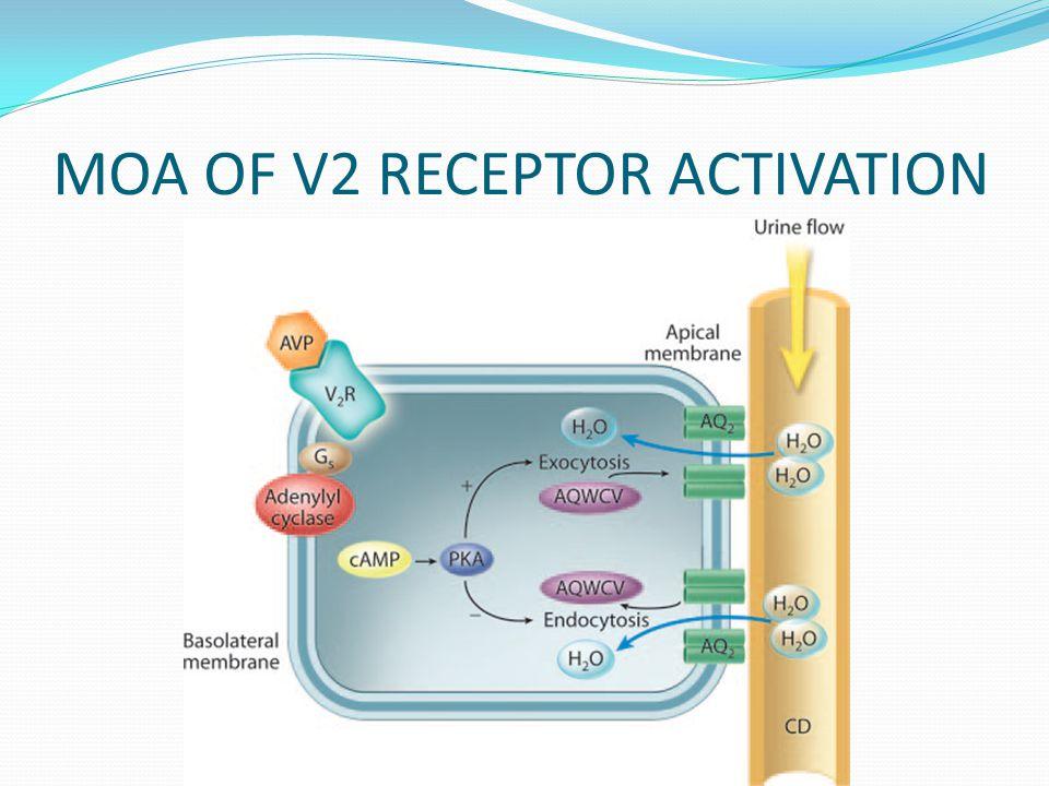 MOA OF V2 RECEPTOR ACTIVATION