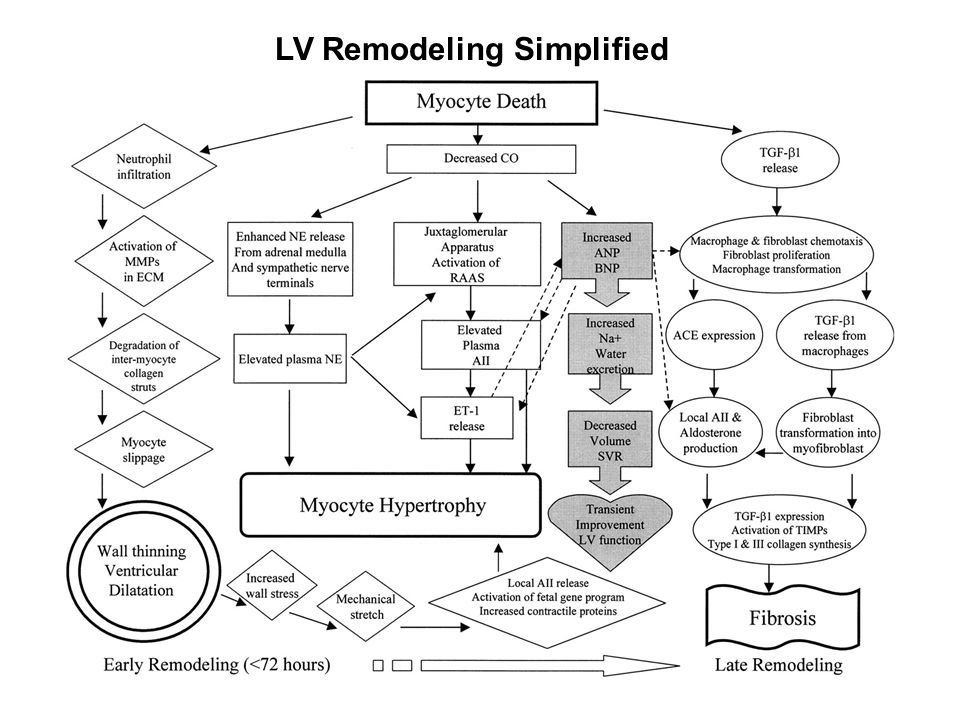 LV Remodeling Simplified