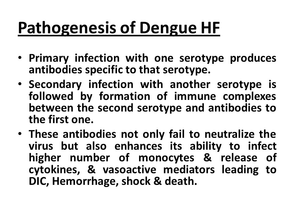 Pathogenesis of Dengue HF Primary infection with one serotype produces antibodies specific to that serotype.