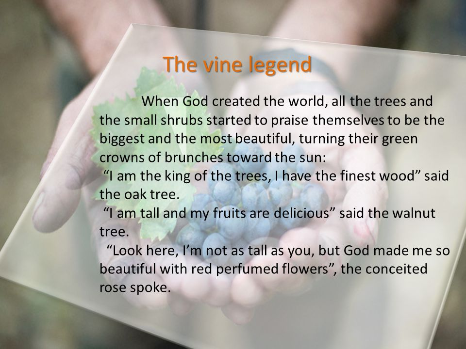 The vine legend The vine legend When God created the world, all the trees and the small shrubs started to praise themselves to be the biggest and the most beautiful, turning their green crowns of brunches toward the sun: I am the king of the trees, I have the finest wood said the oak tree.