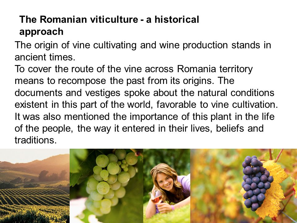 The origin of vine cultivating and wine production stands in ancient times.
