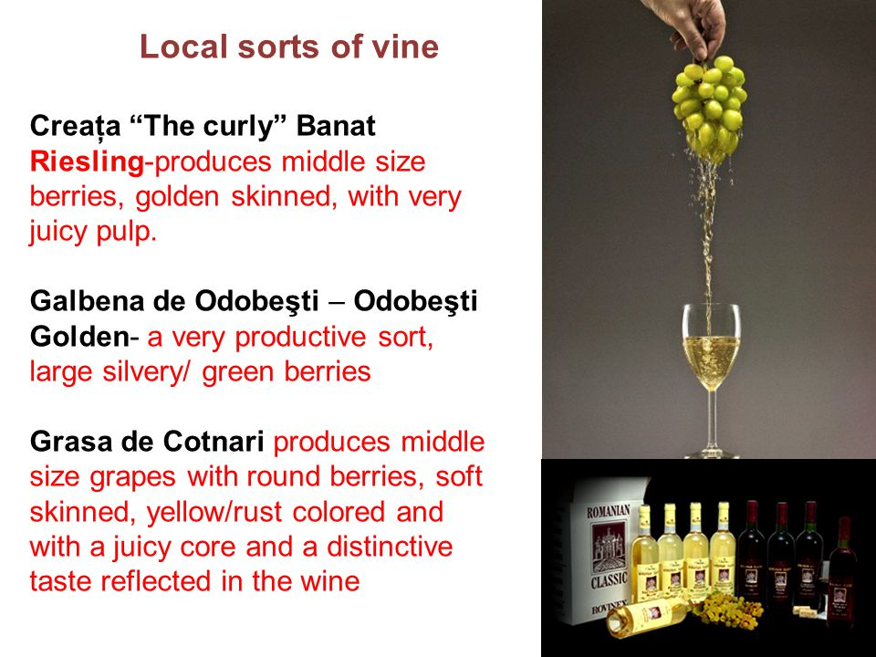 Creaţa The curly Banat Riesling-produces middle size berries, golden skinned, with very juicy pulp.