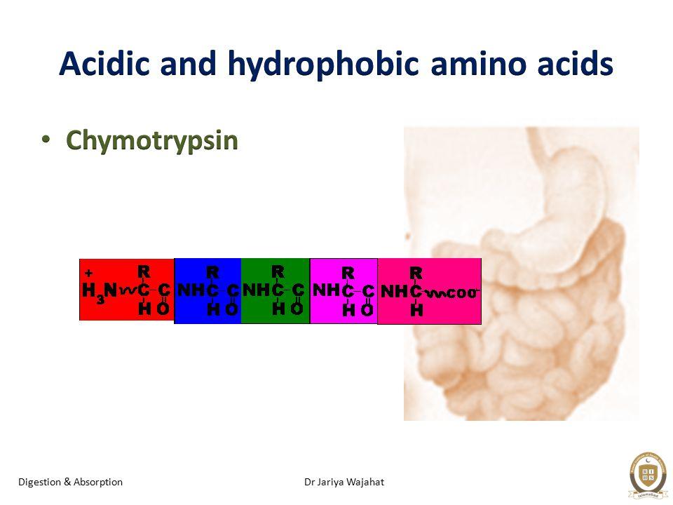 Dr Jariya WajahatDigestion & Absorption